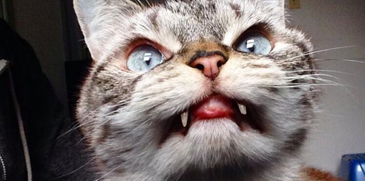 Loki, le chat vampire qui fascine la toile !