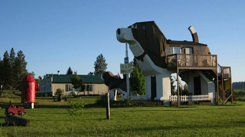 Louer une maison en forme de chien, ça vous dirait ?