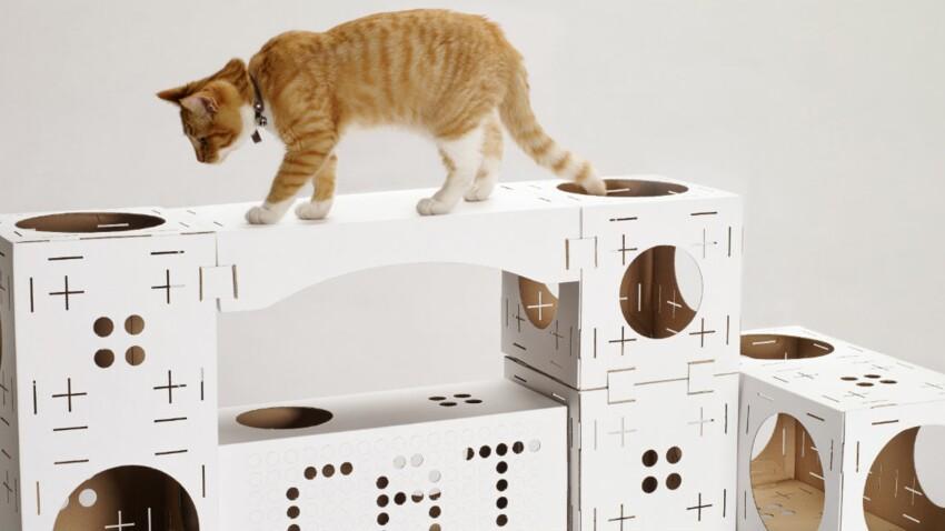 La maison des chats