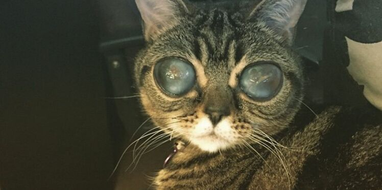 Matilda : l'animal mi-chat, mi extraterrestre