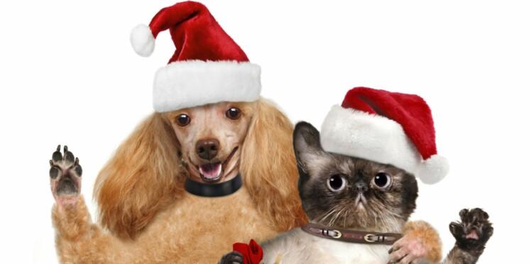 Les animaux abandonnés ont droit à leur Noël