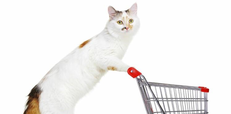 site pour chat