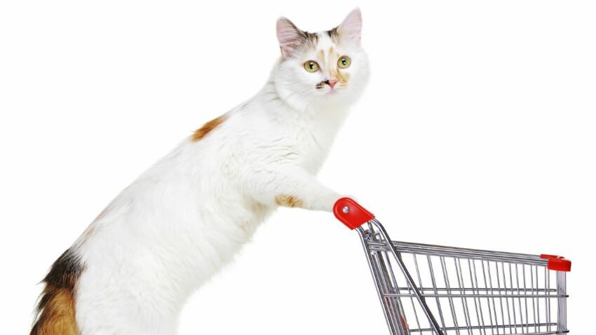 Un nouveau site pour nos amis chiens et chats
