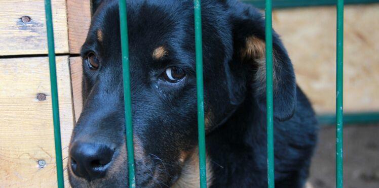 Une Nouvelle Chance pour les chiens abandonnés