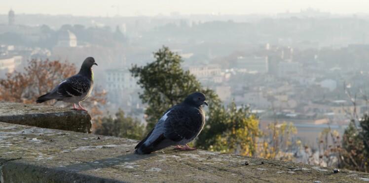 Les oiseaux : plus intelligents en ville qu'à la campagne ?