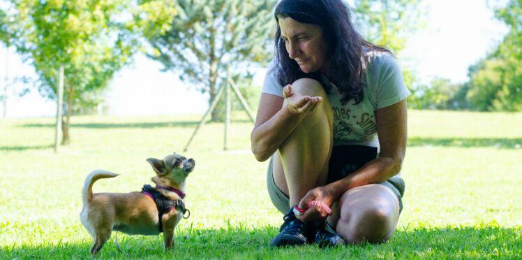 Partagez un camp d'été avec votre chien