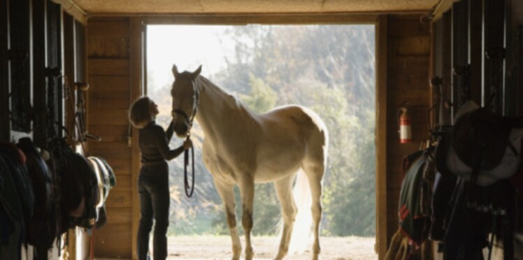 Partez à la découverte des chevaux