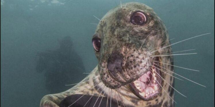 (PHOTO) Le phoque au sourire enjôleur