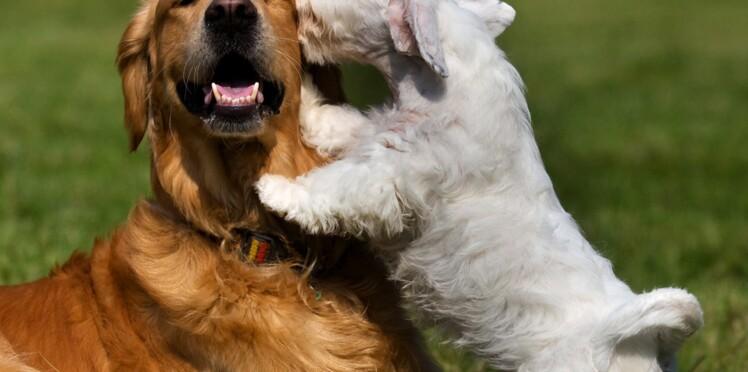 Les Français préfèrent prendre en photo leur animal que leur... conjoint