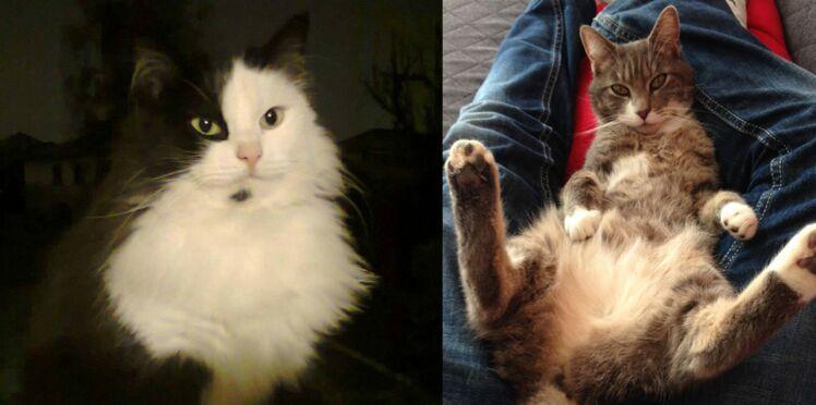 Photos : les chats mignons des Femmes ac'