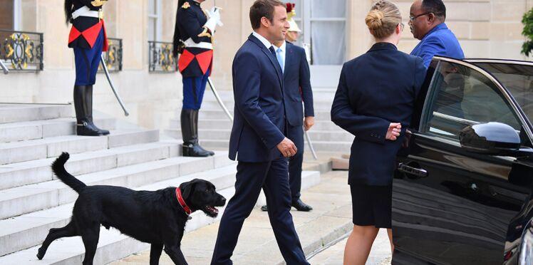 Photos - Nemo rejoint le rang des chiens de Présidents