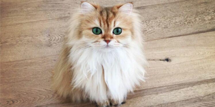(Photos) Smoothie : le plus beau chat du monde?