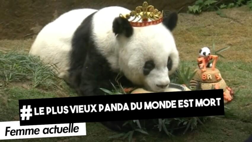 Le plus vieux panda du monde est mort