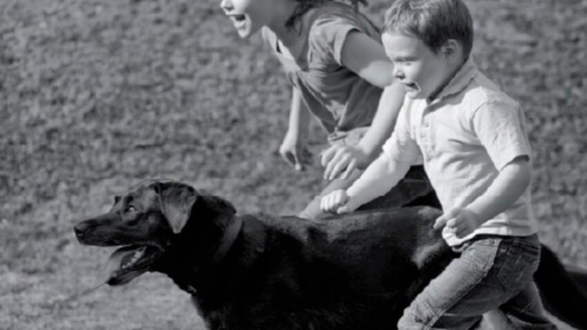 Animaux de compagnie : Purina sensibilise les écoliers
