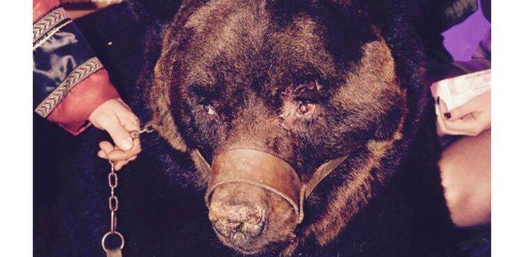 Quand une discothèque exhibe un ours pour une soirée cirque