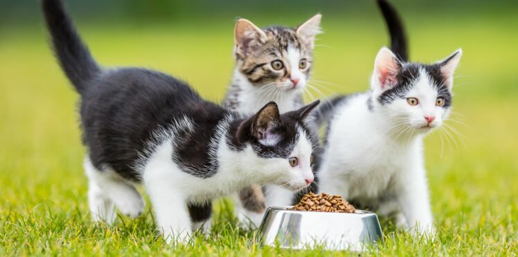 Rendez heureux les chats des refuges en participant à cette collecte d'aliments