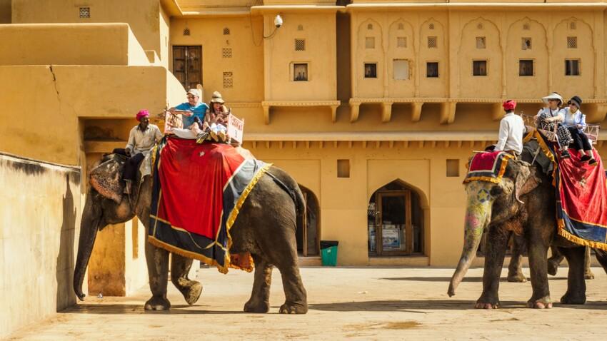 Attention au risque de tuberculose si vous faites une balade sur un éléphant