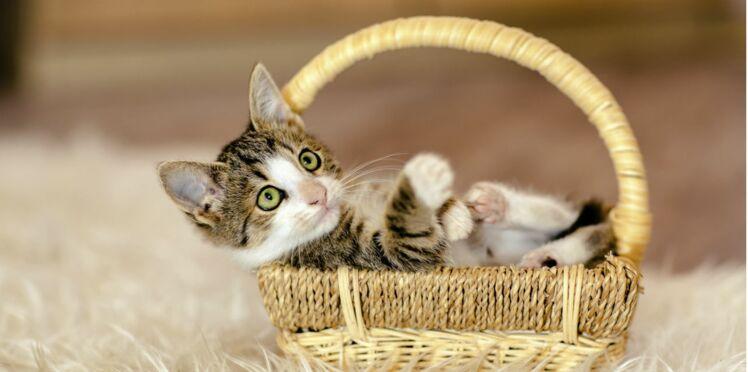 Participez au sauvetage des chats et des chatons