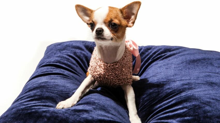 Tenues de luxe pour petits chiens