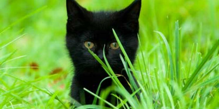 Tests cosmétiques sur les animaux : des fonds pour les éviter