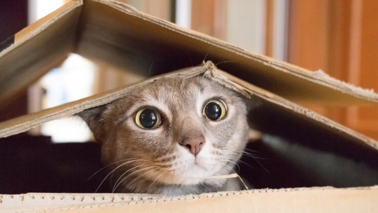 Top 10 des découvertes insolites sur le chat