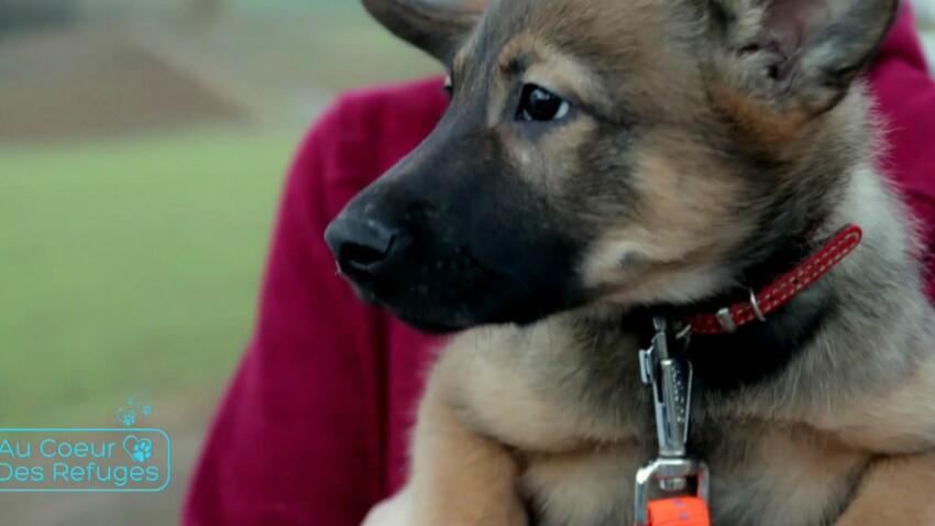 Tout savoir sur la vie des animaux en refuges