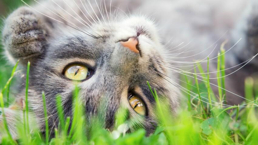 Tout savoir sur les chats