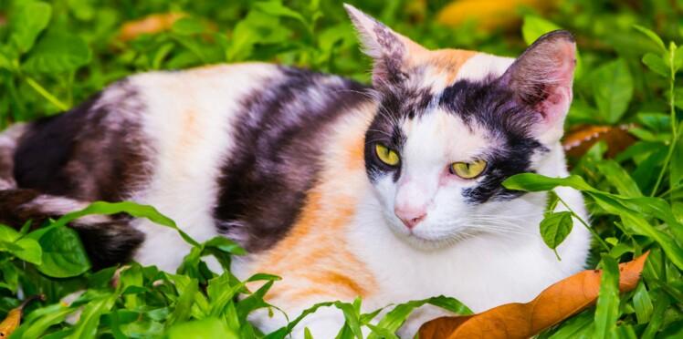 Pourquoi est-il indispensable de traiter son chat contre les parasites ?