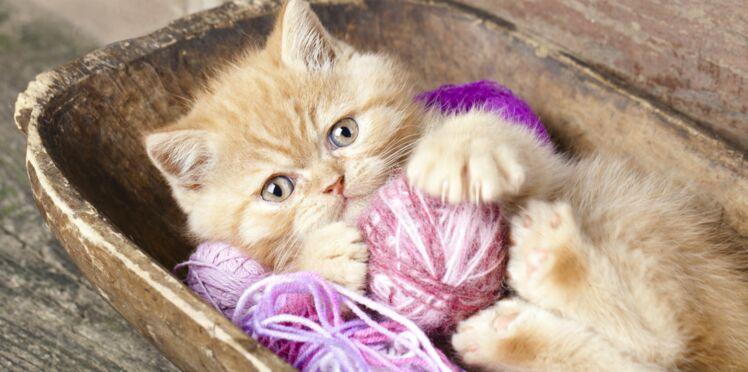 Tricoter pour les chats de la SPA