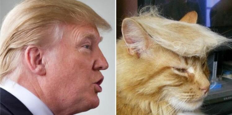 Trumpyourcat : les chats aux coiffures de Donald Trump