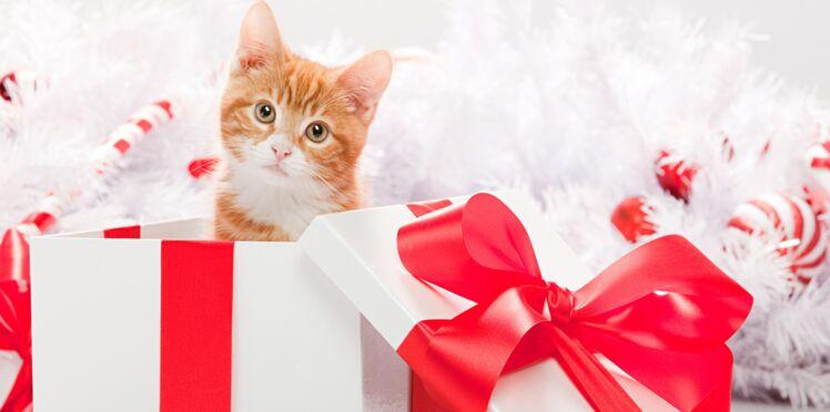 « Un animal n'est pas un cadeau de Noël »