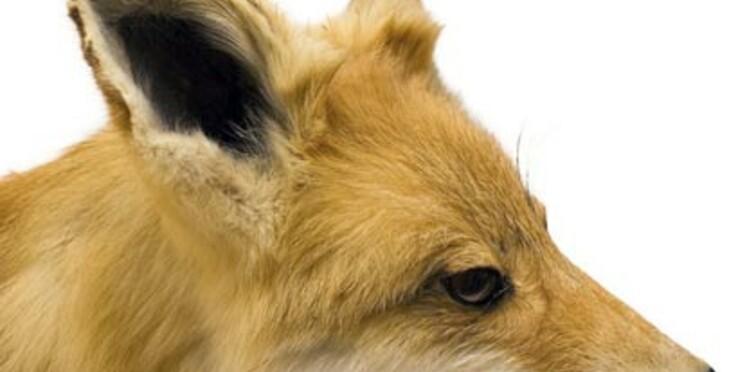 Un chien sacrifié « au nom de l'art »