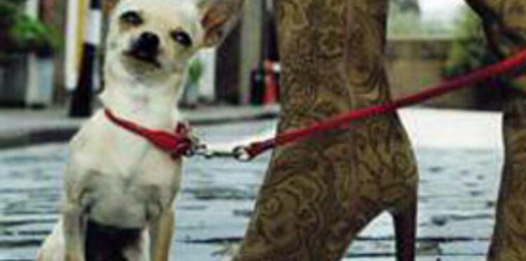Indiscrétion : le chien des Sarkozy
