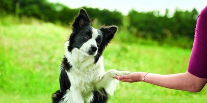 site de rencontre pour chiens zele