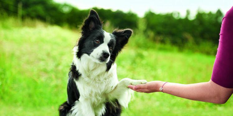 Un coup de main pour éduquer les chiens guide