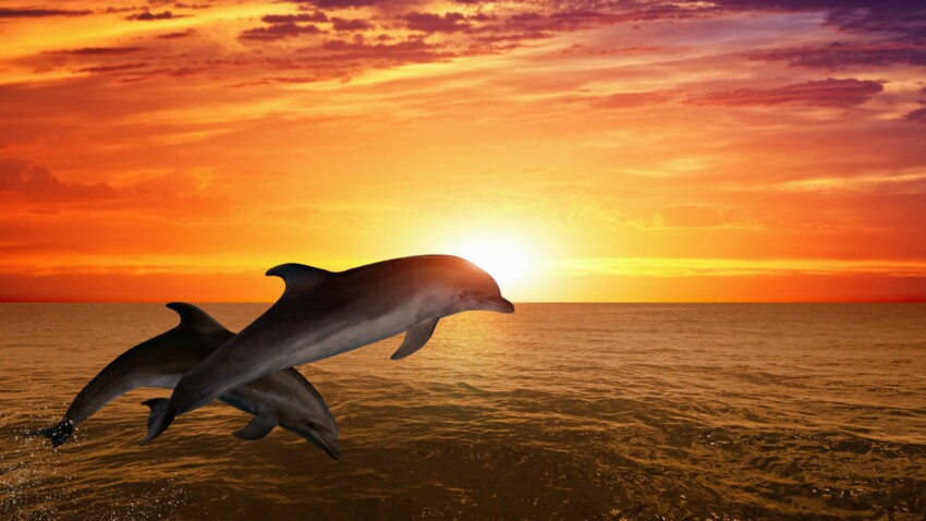 Ségolène Royal fait signer un décret améliorant les conditions de vie des dauphins en captivité