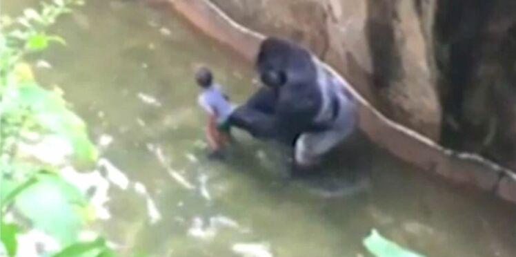 Un enfant mal surveillé provoque la mort d'un gorille