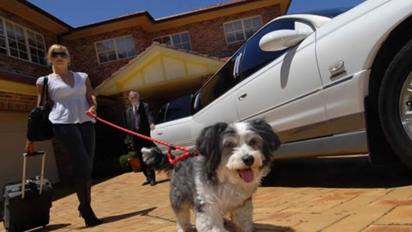 Un hôtel pour animaux avec un service limousine en prime !
