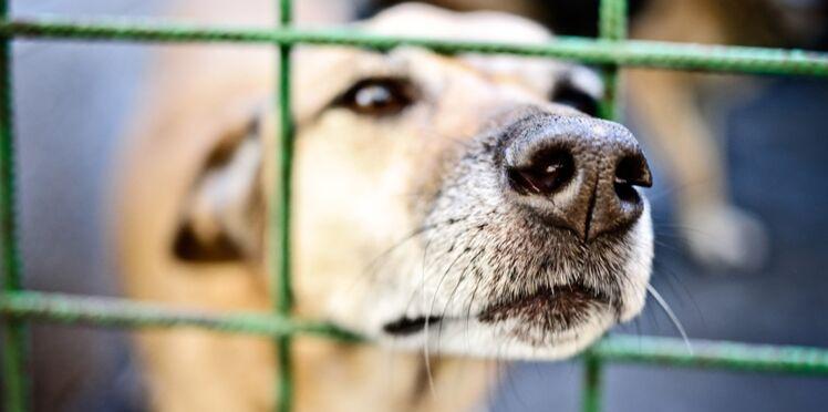 Un million d'euros pour les animaux abandonnés