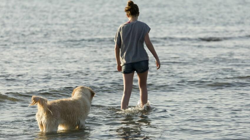 Vacances de dernière minute : les lieux où vous pouvez emmener votre animal