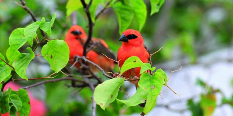 Venez admirer les oiseaux