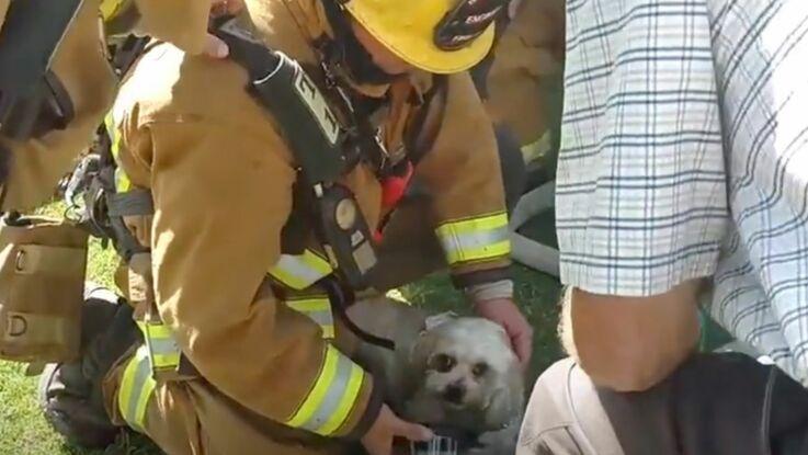 VIDEO – Un chien sauvé d'un incendie par les pompiers
