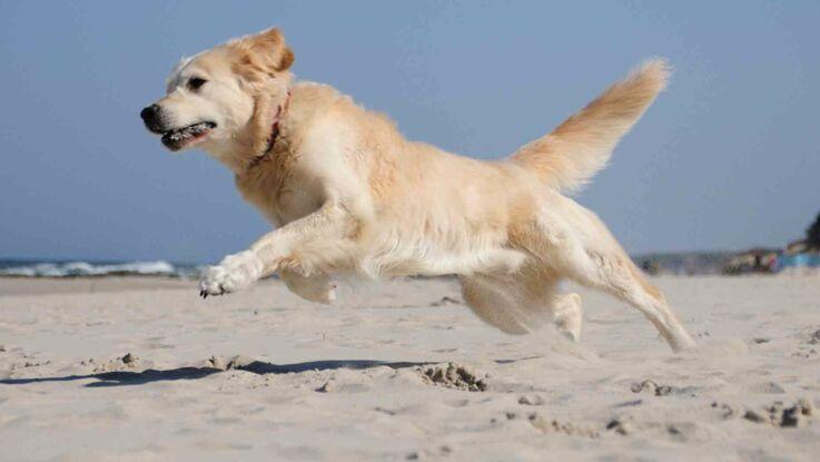 Vidéo - Un jeune faon sauvé des eaux par un chien