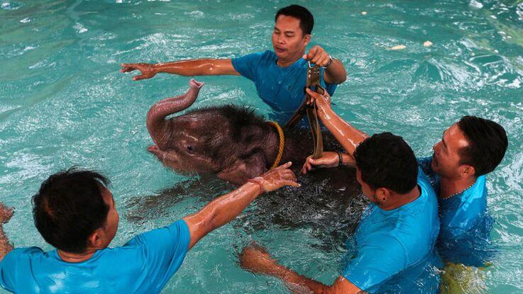 VIDEO - Un bébé éléphant sauvé par l'hydrothérapie!