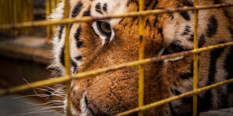 La Ville de Paris veut interdire les animaux sauvages dans les cirques