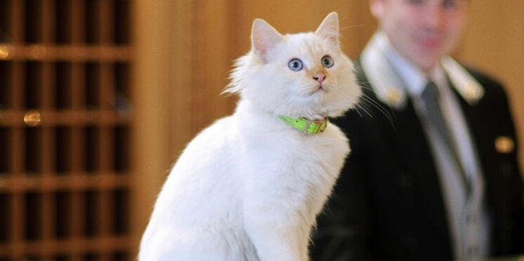Vis ma vie de chaton au Bristol