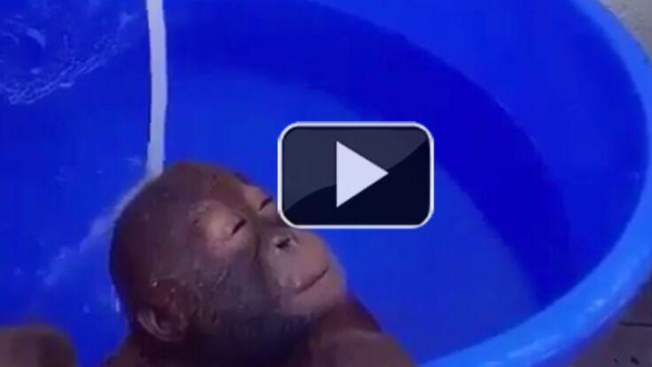 Températures extrêmes ? Les animaux se jettent tous à l'eau dans notre zapping web !