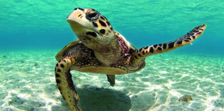 Aldabra, trésor de la biodiversité