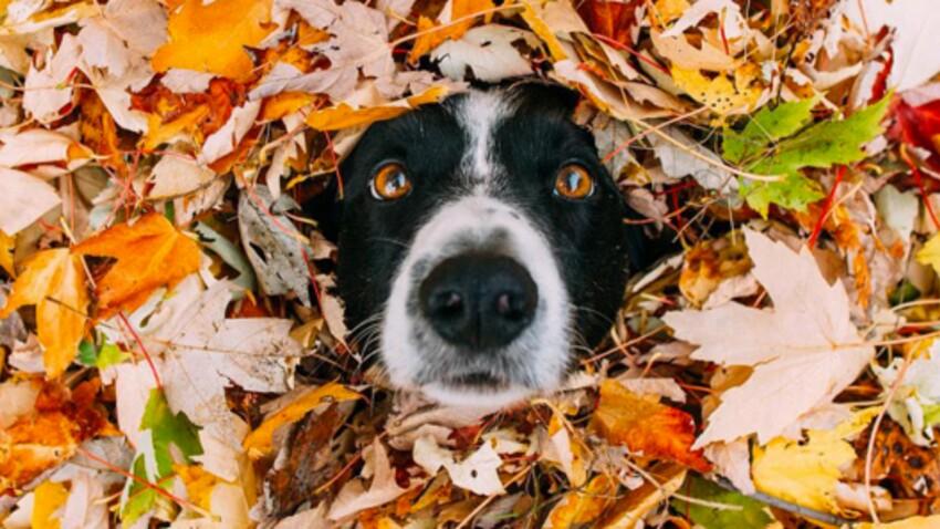 """""""Où se cache Momo ?"""" : Où est Charlie, mais avec un chien"""