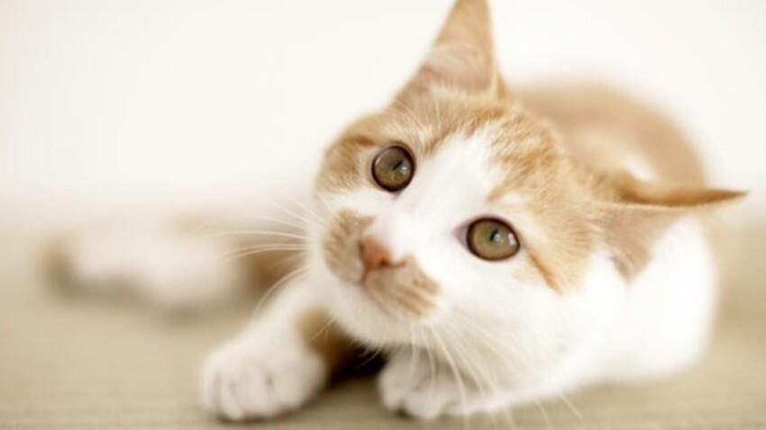 5 idées reçues sur votre chat